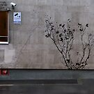 Ode to Banksy by Adrian Rachele