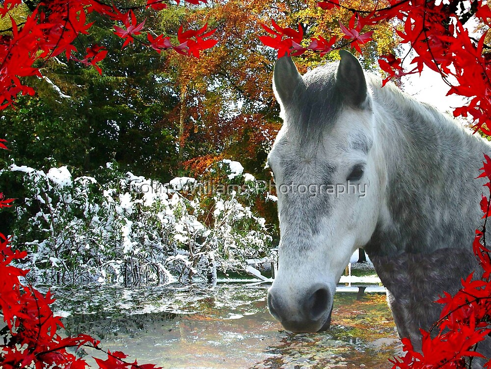 Horse in Fall by Colin  Williams Photography