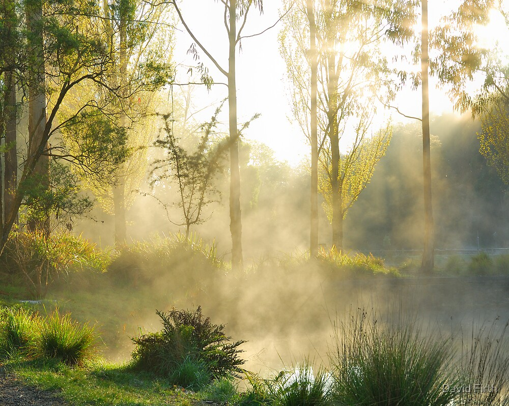 Golden Mist by David Firth