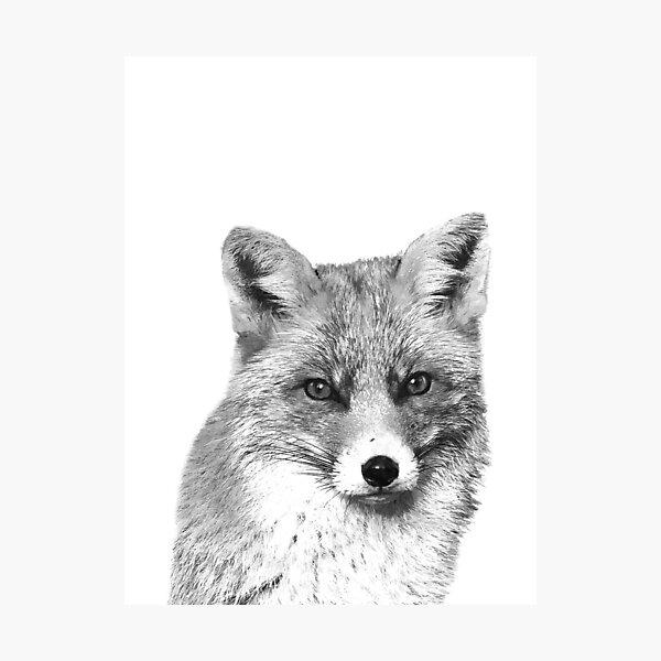 Black and White Fox Photographic Print