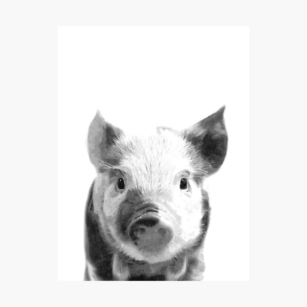 Black and White Pig Photographic Print