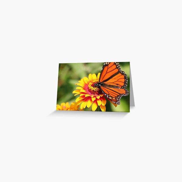 Monarch Beauty: Wings Spread Greeting Card