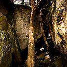 Yosemite Tree by Jenny Miller