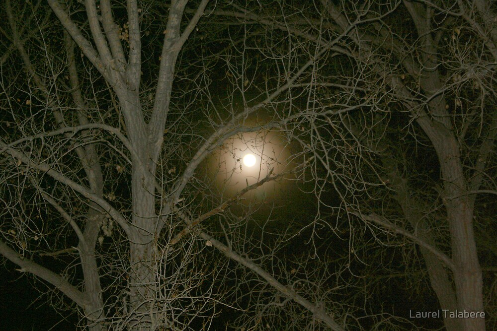 Moon through the Trees by Laurel Talabere