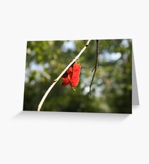 Relief Greeting Card