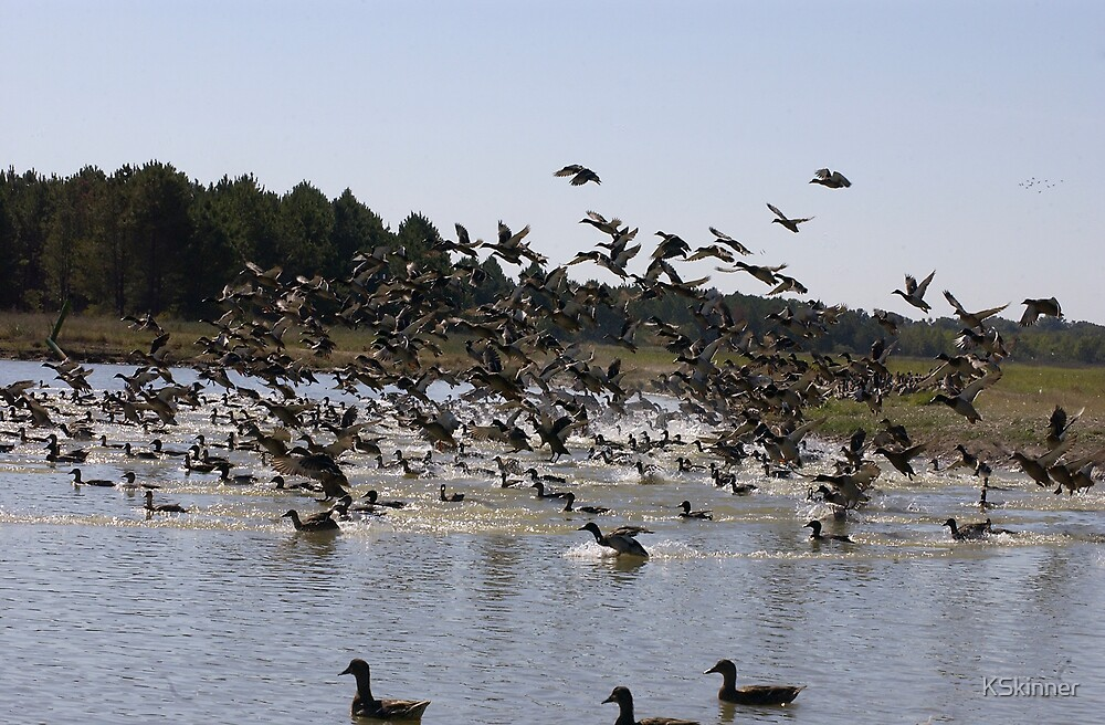 Got Ducks? by KSkinner