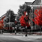 Red Trees by Rodney Lee Williams