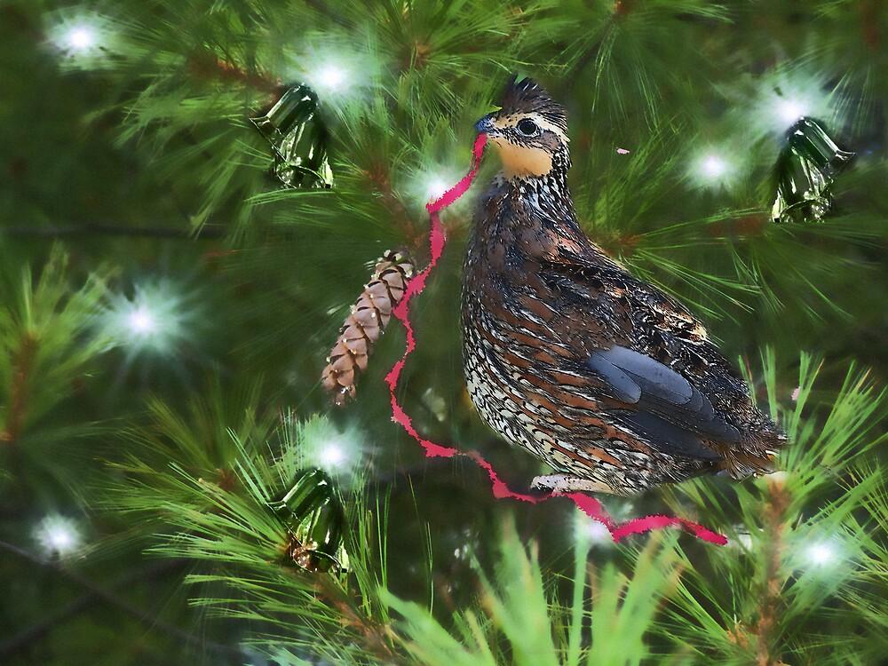 Holiday Ribbon by Judi Taylor