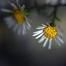 Sunshine on a rainy day by Vikram Franklin