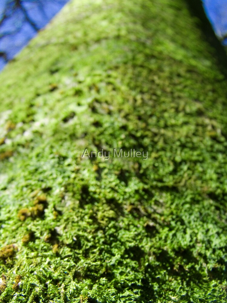 Tree Fluff by Andy Mulley