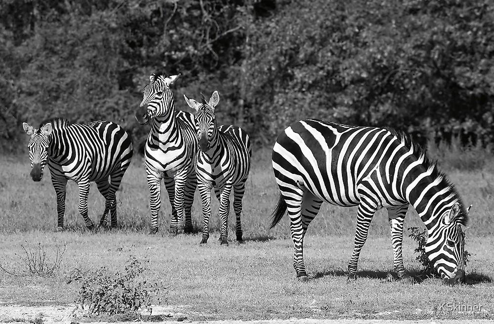 Grant's Zebra by KSkinner