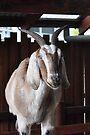 NDVH Australia Zoo 2 by nikhorne