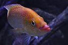 NDVH Fish by nikhorne