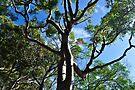 NDVH Fraser Island 1 by nikhorne