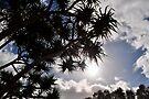 NDVH Fraser Island 3 by nikhorne
