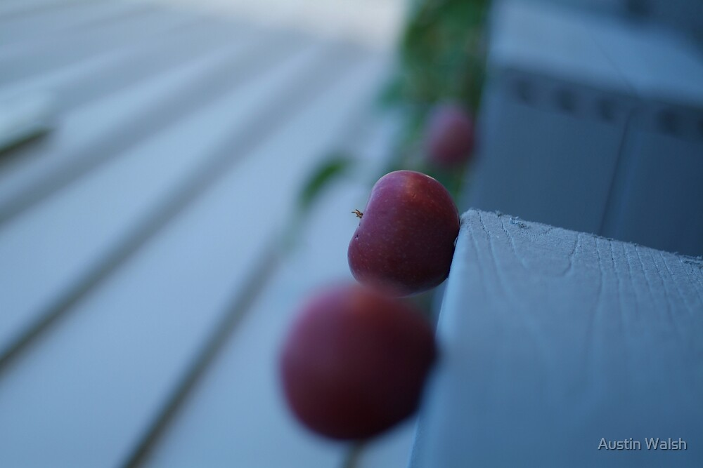 Apples in perspective 2 by Austin Walsh