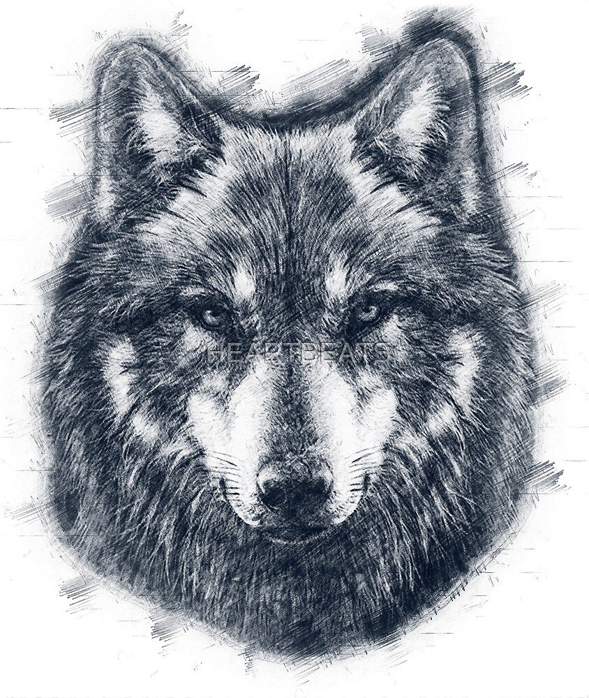 wolf face drawing by heartbeats