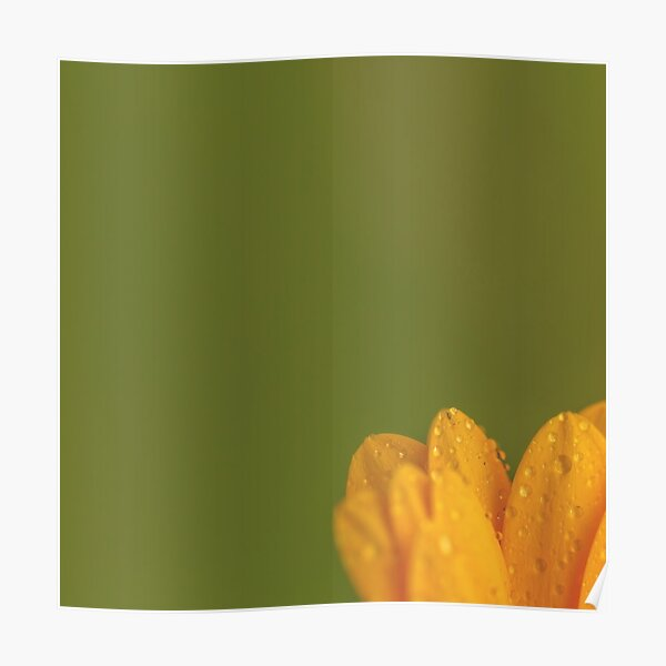 Wet Yellow Petals against Green background Poster