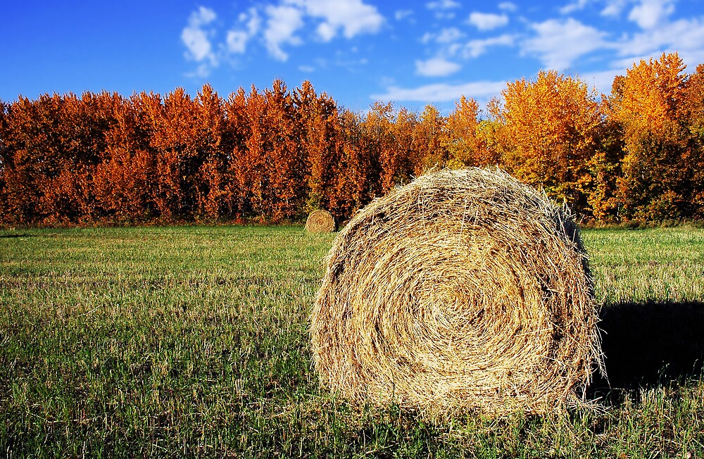 hay bail by dnsphotography
