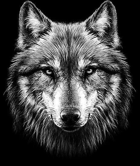 Quot Wolf Face Quot Poster By Heartbeats Redbubble