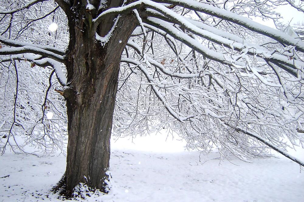 Winter Snowfall by clizzio