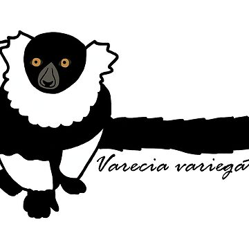 Kizzy B&W Ruffed Lemur w/ Sci name by wildlifeandlove