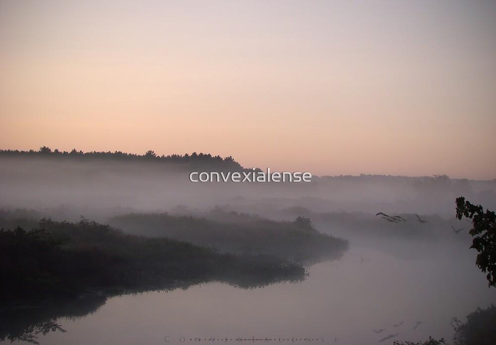Cadmium Sunrise 2.4 by convexialense