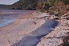 NDVH Fraser Island 8 by nikhorne