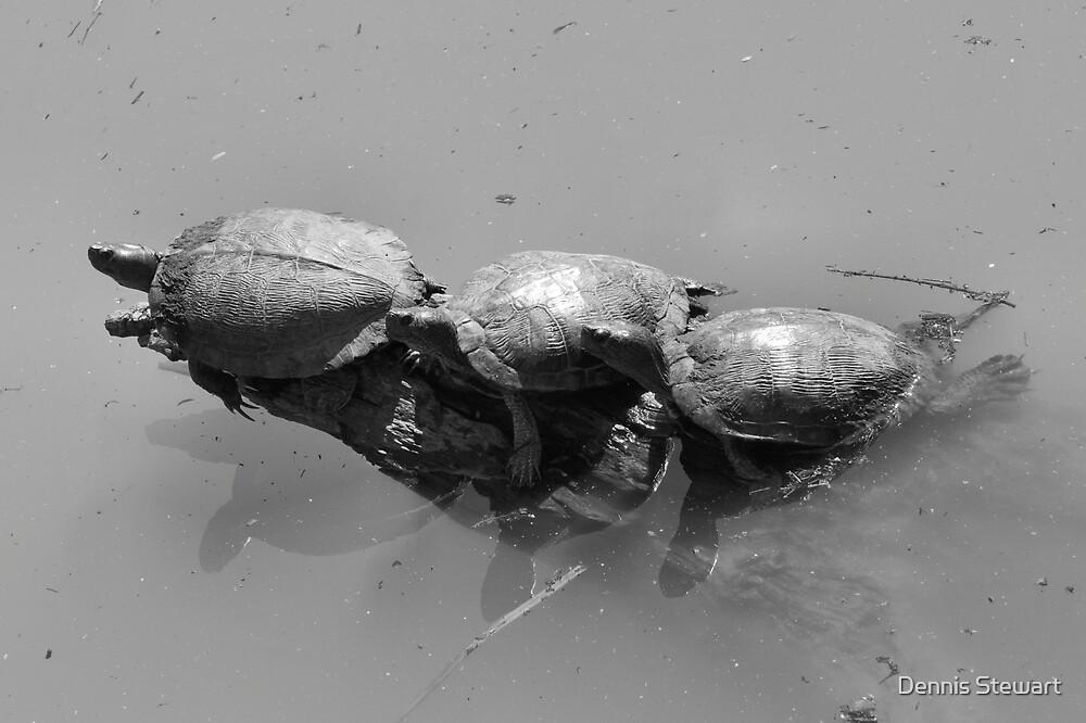 Sunning Turtles by Dennis Stewart