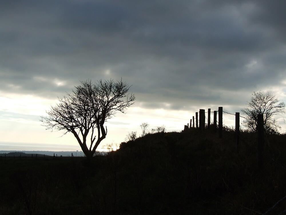Winter Landscape by pcimages
