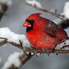 Sitting in the cold in Virginia by Bine