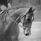 Softly - Black And White Horse Photography  by Michelle Wrighton