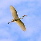 Soaring Great Egret by Dawne Dunton