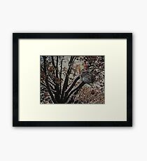 And a partridge in a pear tree .... Framed Print
