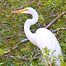 Great Egret Resting by Dawne Dunton