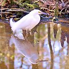 Reflection Of A Snowy Egret by Dawne Dunton