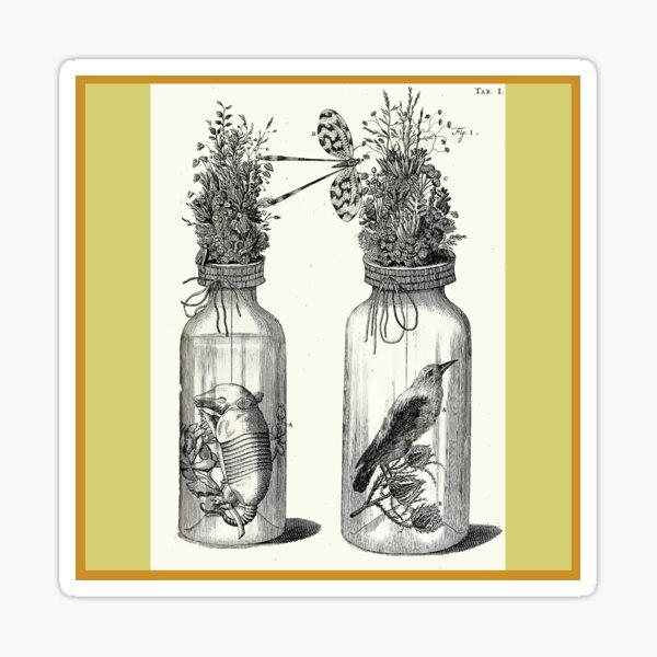 Cabinet of Curiosities - Frederik Ruysch Diorama 1720 - Birds and Armadillo under Glass Sticker