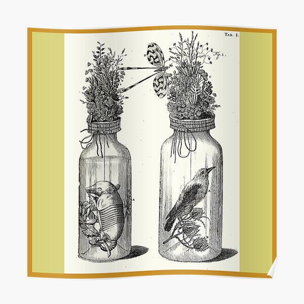 Cabinet of Curiosities - Frederik Ruysch Diorama 1720 - Birds and Armadillo under Glass Poster