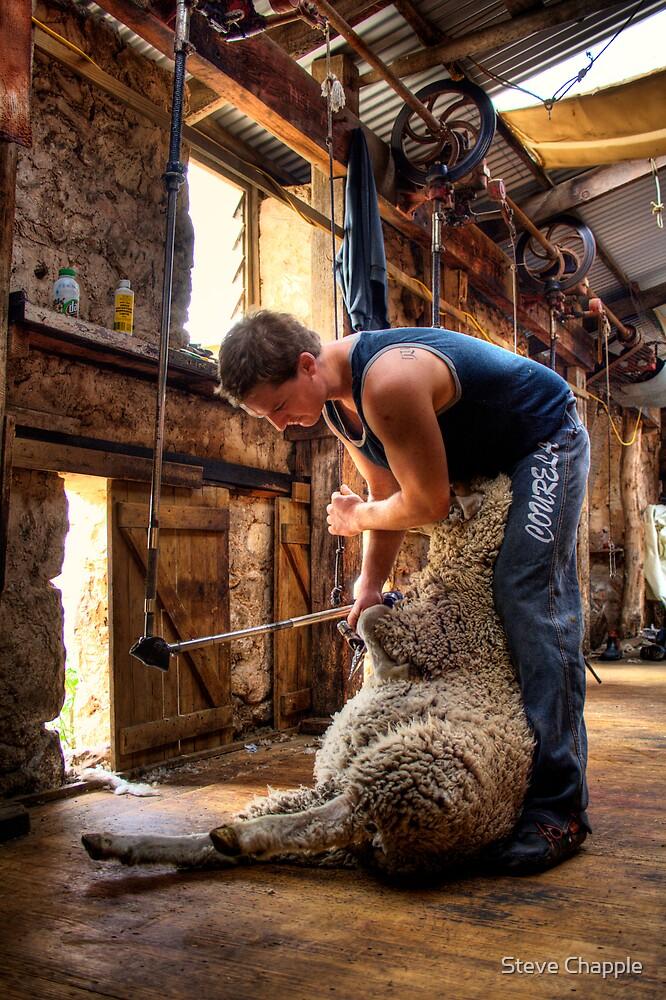 The Shearer by Steve Chapple
