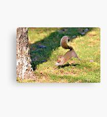 Runnin' With A Nut Canvas Print