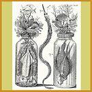 Cabinet of Curiosities - Frederik Ruysch Diorama 1720 - Squids,  Lion Fish, Octopus, Ocean by katastrophy