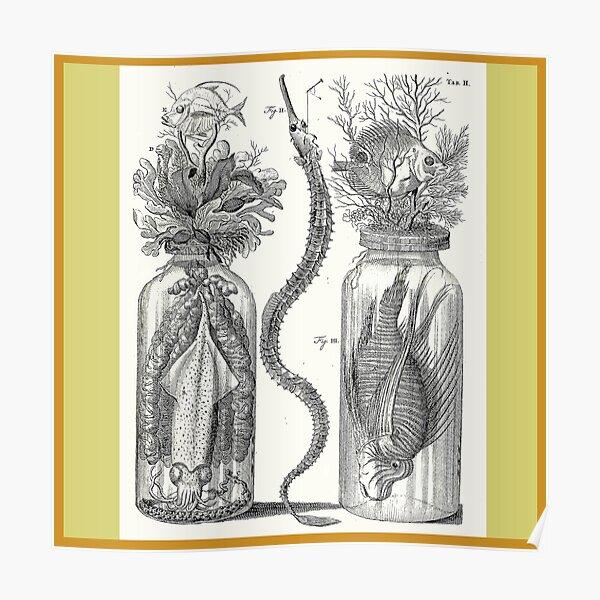 Cabinet of Curiosities - Frederik Ruysch Diorama 1720 - Squids,  Lion Fish, Octopus, Ocean Poster
