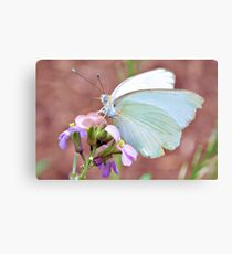 Great Southern White Canvas Print