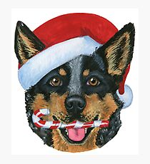 Christmas Blue Heeler Photographic Print