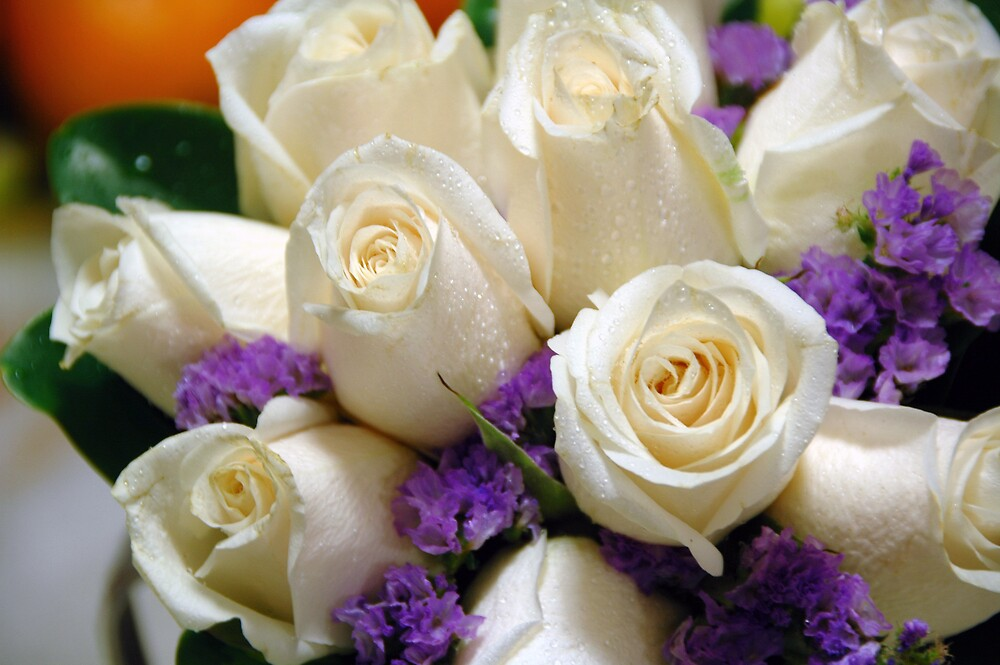 White Roses by hancheng