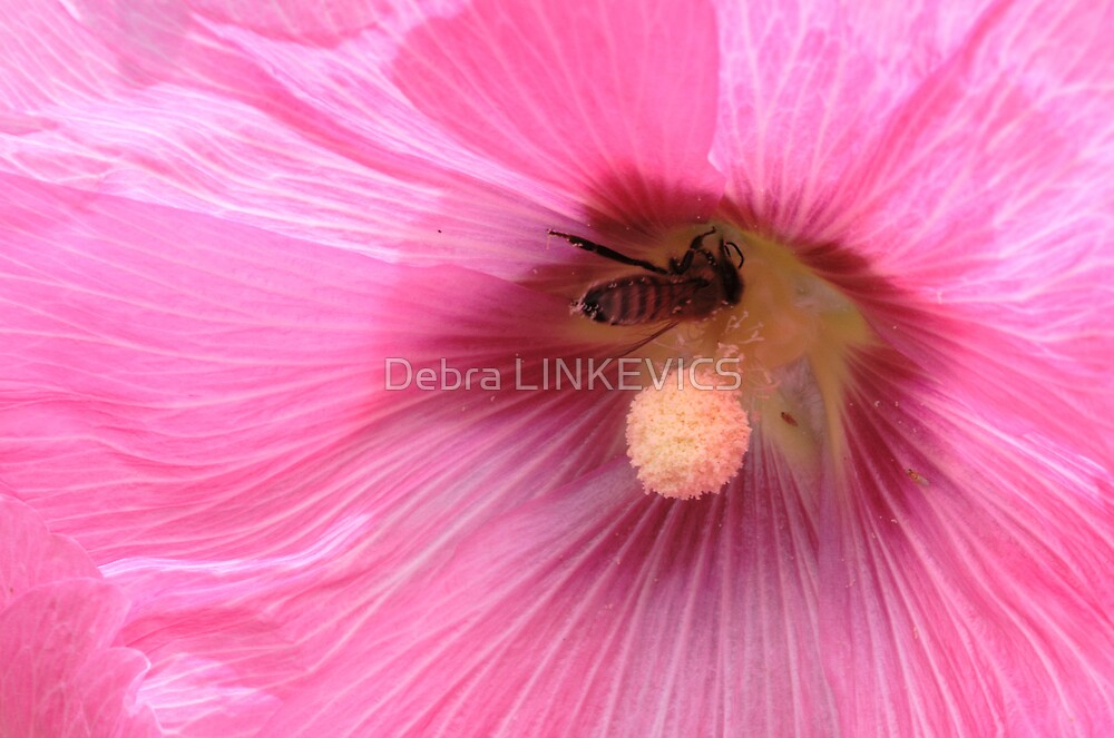 ~Hollyhock~ by Debra LINKEVICS