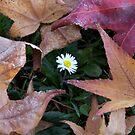 autumn by Nicole M. Spaulding