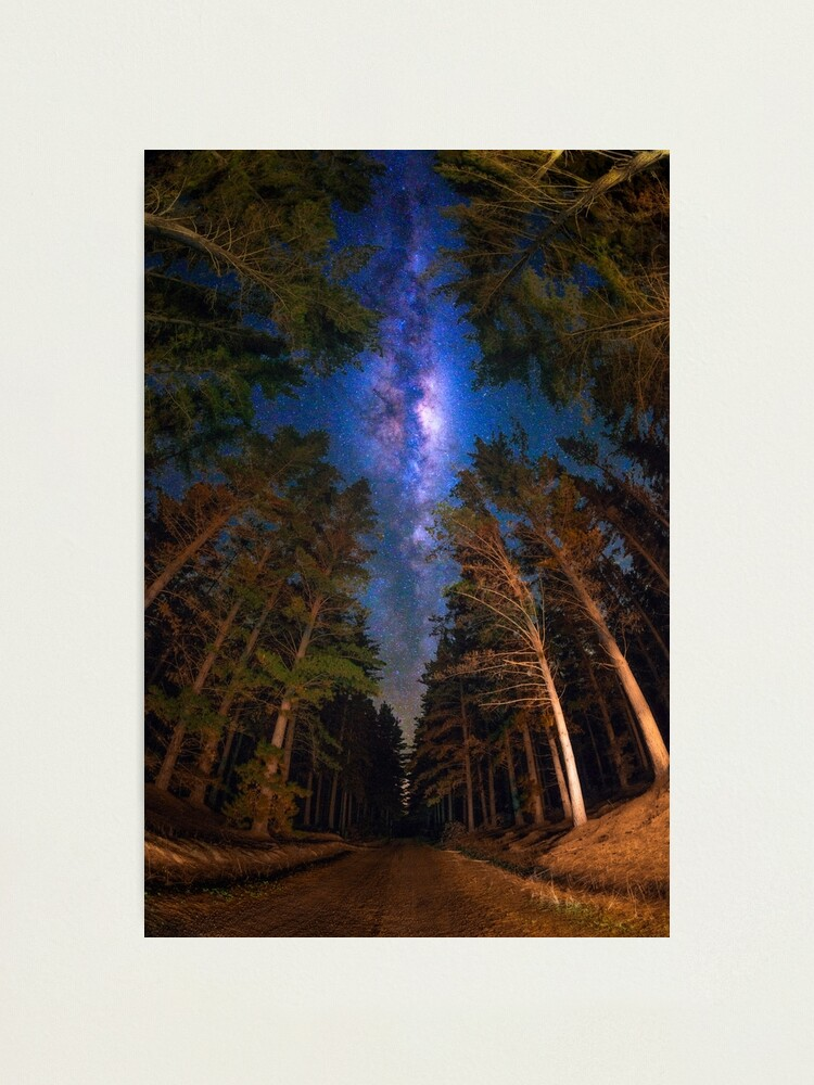 Alternate view of View from the Forest Photographic Print