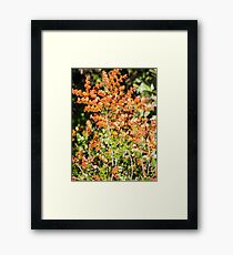 deciduous beech and ferns Framed Print
