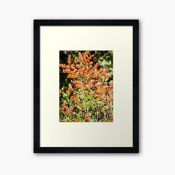 deciduous beech and ferns Framed Art Print
